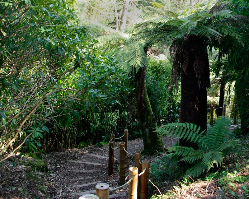 Jungle Steps to Fern Tree Gully, Lost Gardens of Heligan