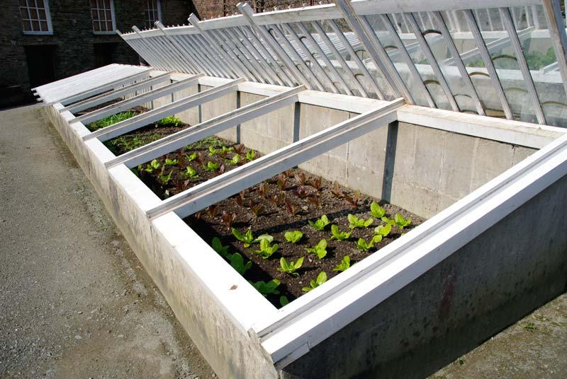 Cold frames full of lettuce seedlings - Melon Yard, Lost Gardens of Heligan