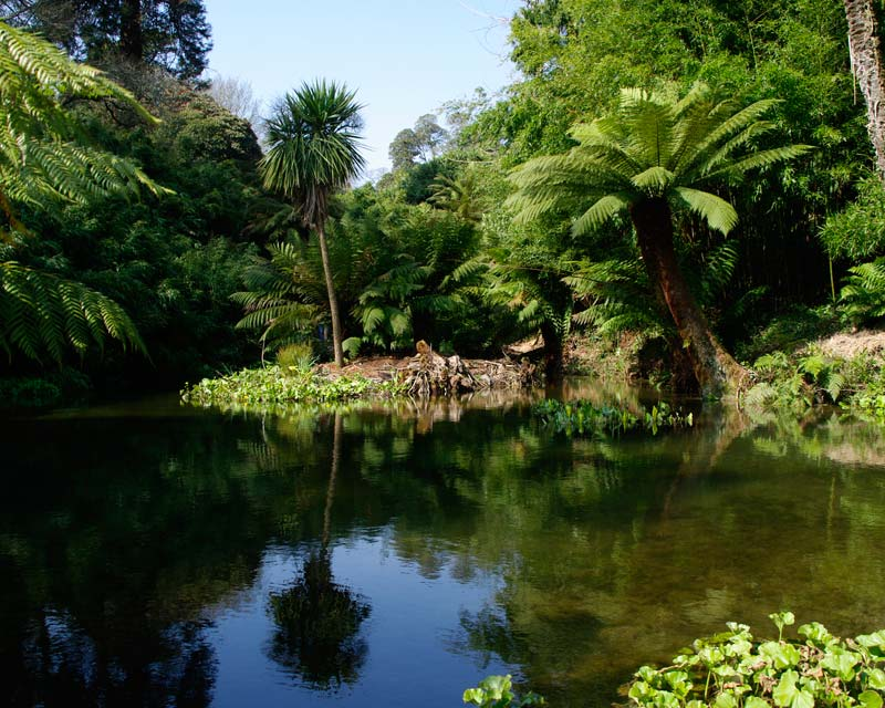 Peace pool at the end of Fern Tree Gully, Lost Gardens of Heligan