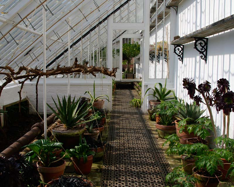 During the winter months many of the frost sensitve plants are stored in the vinery, Lost Gardens of Heligan