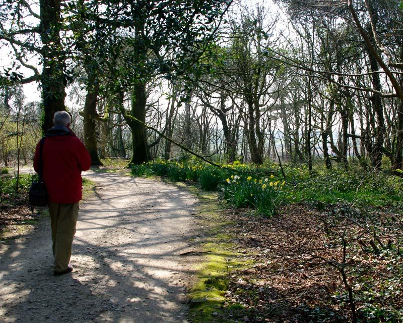 Woodland walk, Lost Gardens of Heligan