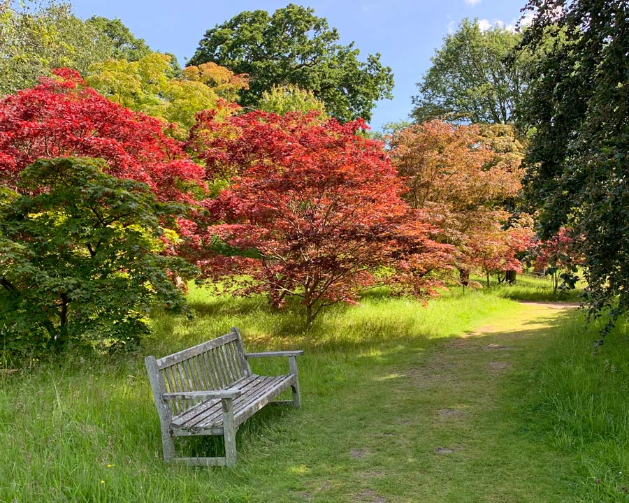 Bodnant Gardens, Conwy, North Wales - Acer Glade