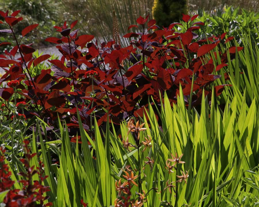 Foliage contrasts, Bodnant