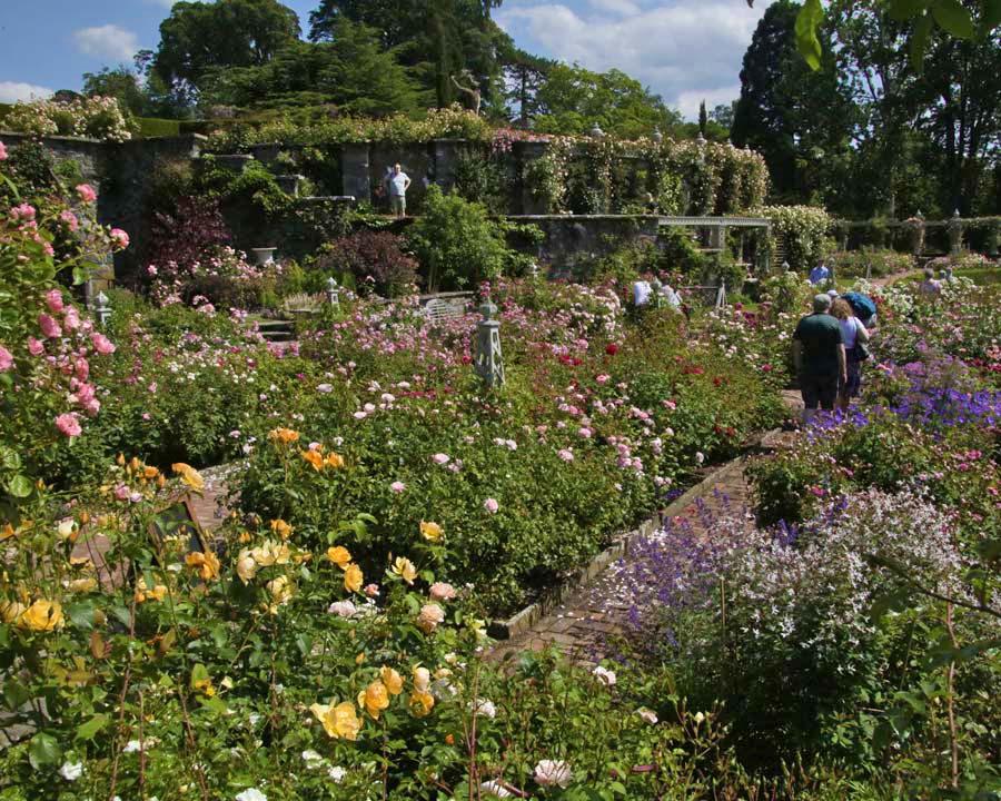 Rose garden Bodnant - a chaos of colour