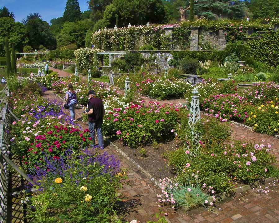 Rose garden Bodnant