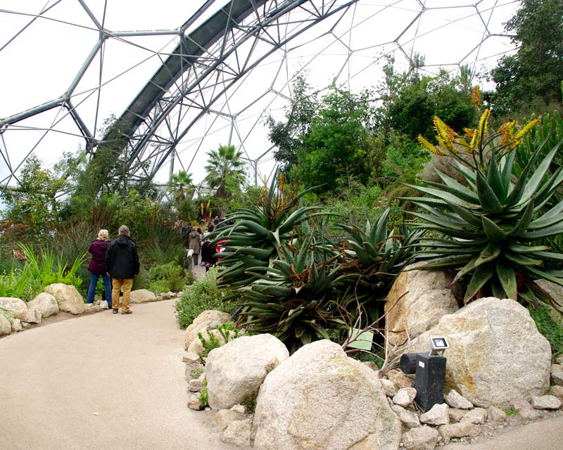 Aloes in the Mediterranean Biome - Eden Project